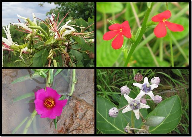 Rainy Season Flowers