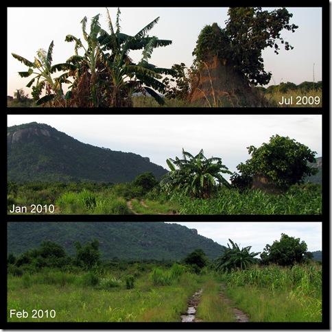 Banana Plant & Termite Mound