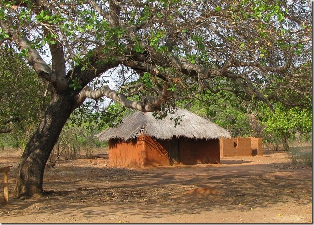 Grass Roof in a Villiage in Southern Tanzania