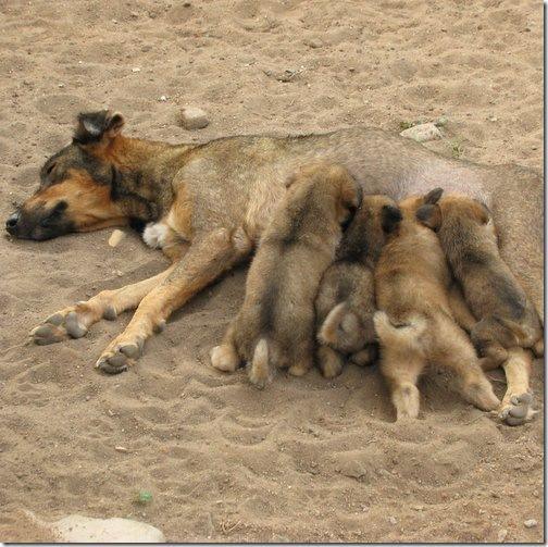 Nala and Pups