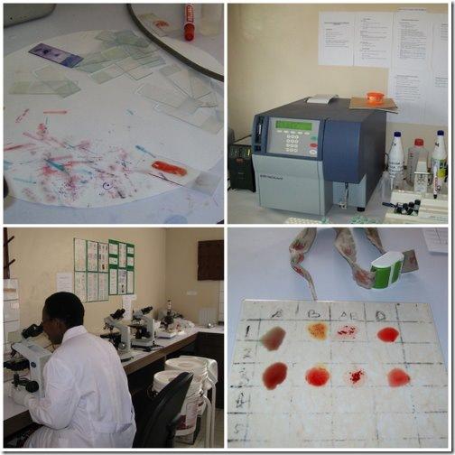 Mkomaindo Lab
