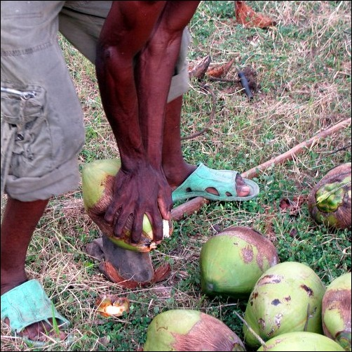 Husking Coconuts