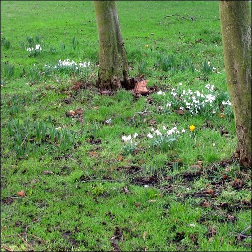Lilies of the Valley & Crocus in England