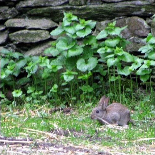 Peter Rabbit at Home