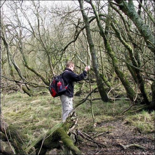 Navigating the Bog