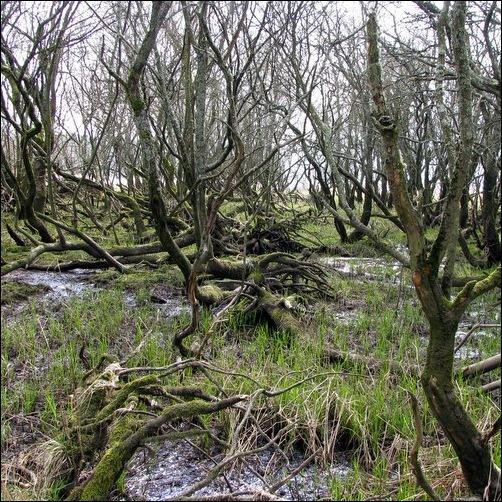 Bassenthwaite Bog