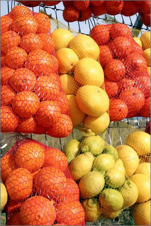 oranges and lemons - microsoft clipart